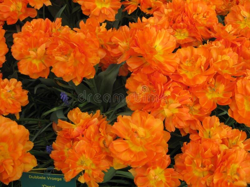 Pitture di aprile dell'Olanda 2 immagini stock