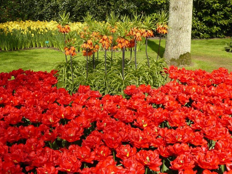 Pitture di aprile dell'Olanda 11 fotografia stock