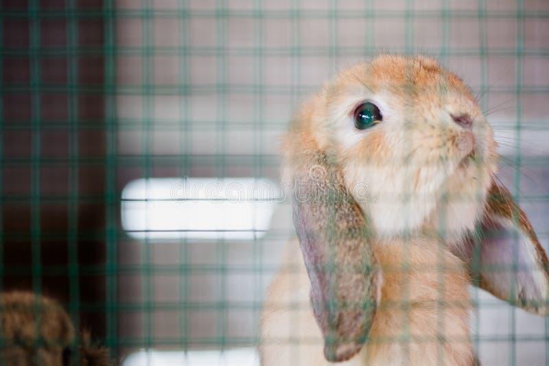 Pitty uroczy dziecko królik w hutch zdjęcie stock