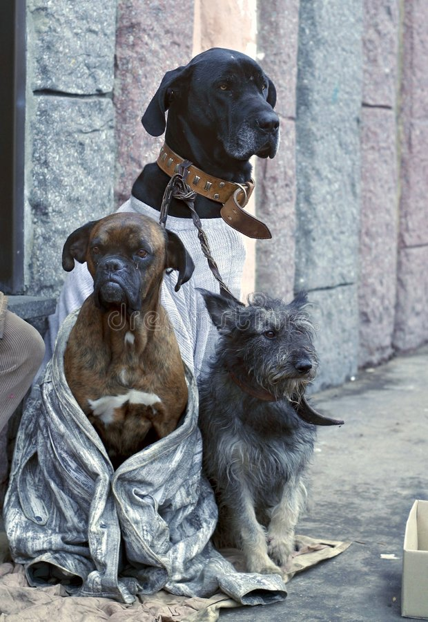 Pity for all tastes. Three dogs of different breeds in the street beg stock photos