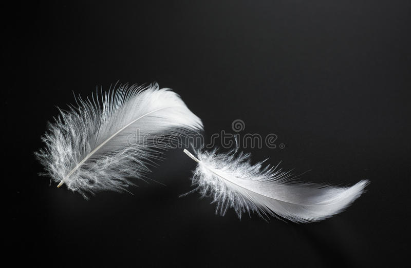 Piuma bianca fotografia stock