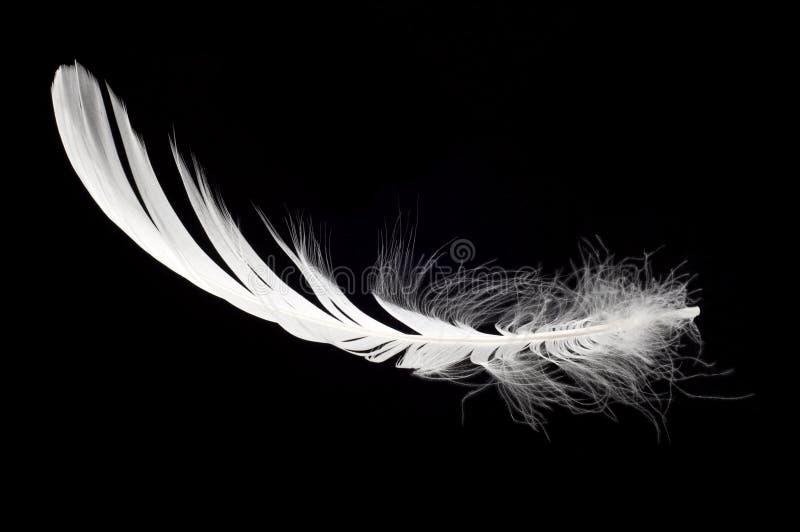 Piuma bianca del cigno isolata fotografia stock libera da diritti