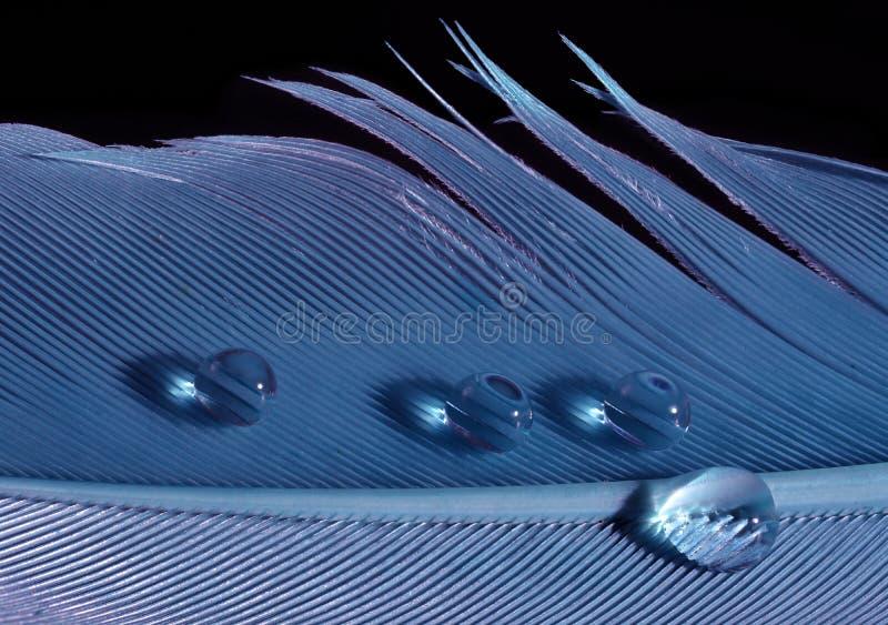Piuma blu con le gocce fotografie stock libere da diritti