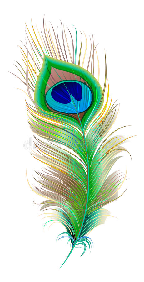 Piuma del pavone E illustrazione di stock