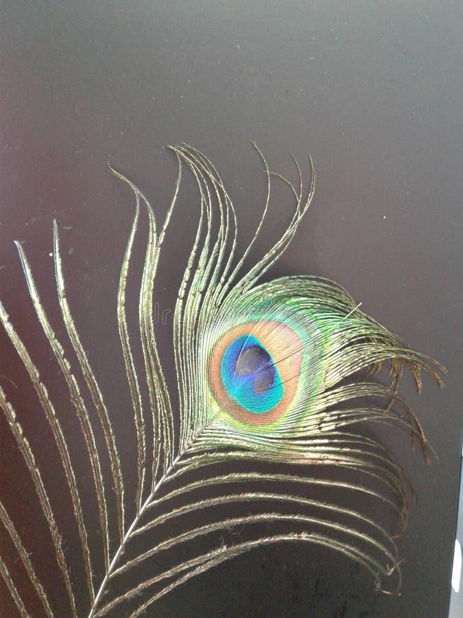 Piuma del pavone su un fondo grigio immagine stock libera da diritti