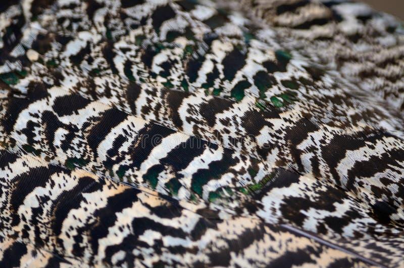 Piuma del pavone verde fotografia stock
