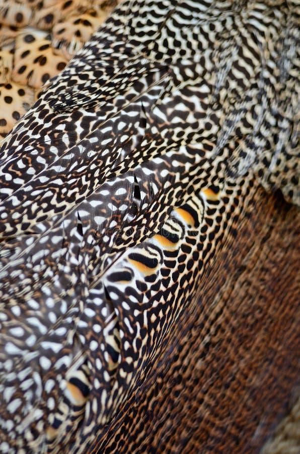 Piuma del pavone verde fotografie stock libere da diritti