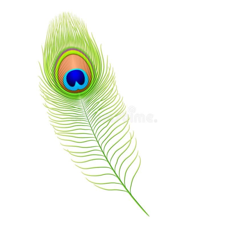 Piuma del pavone. Vettore. royalty illustrazione gratis
