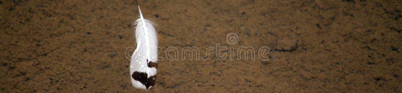 Piuma dell'uccello che galleggia sull'acqua fotografie stock libere da diritti