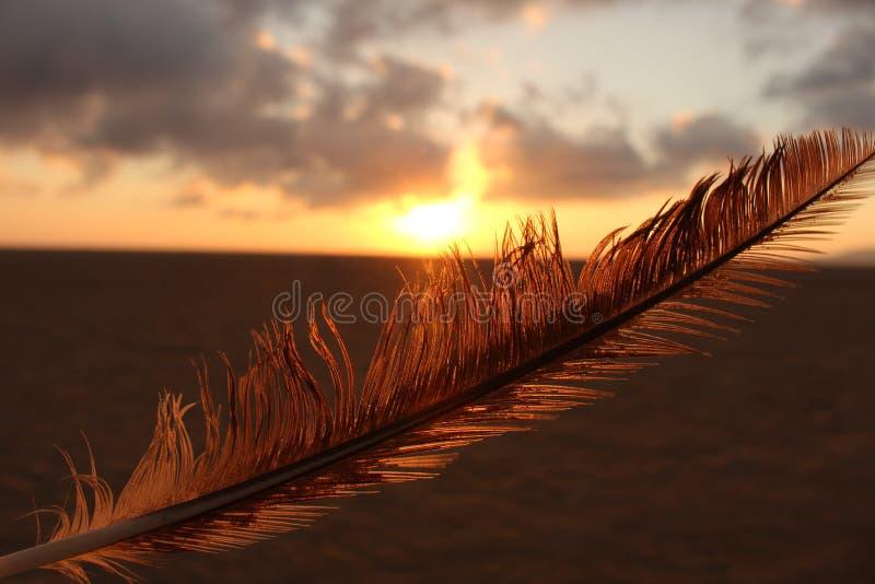 Piuma di tramonto fotografia stock