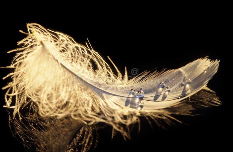Piuma di uccello che galleggia sulla superficie dell'acqua fotografia stock libera da diritti
