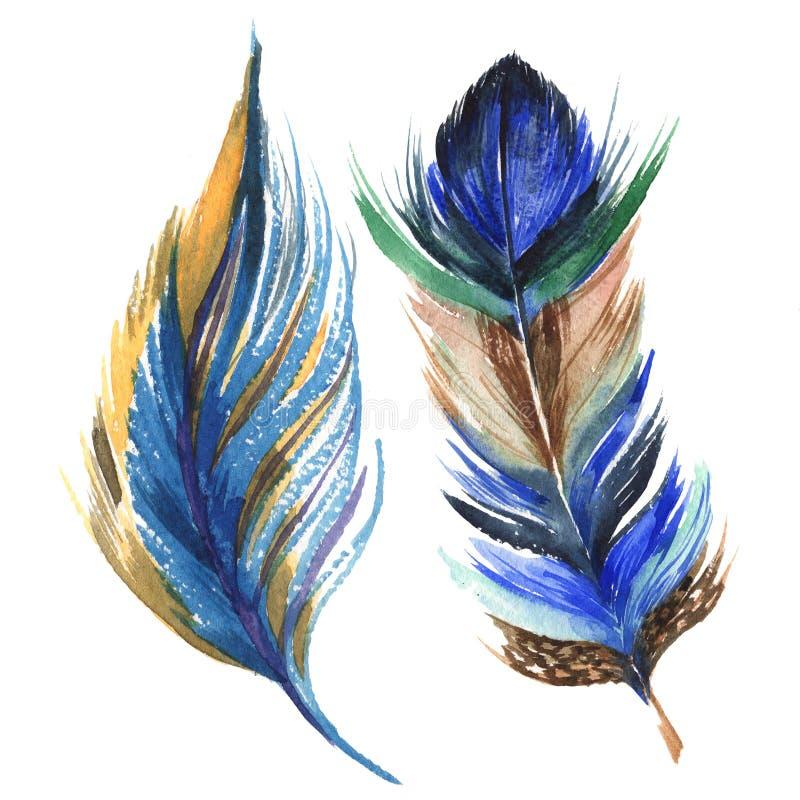 Piuma di uccello dell'acquerello dall'ala isolata illustrazione vettoriale