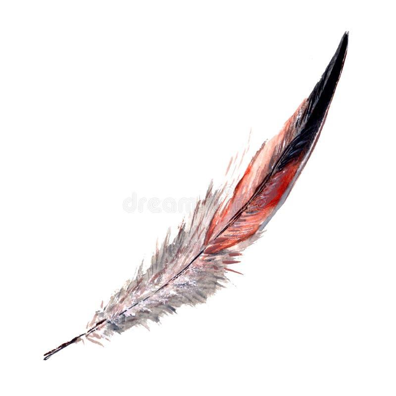 Piuma di uccello dell'acquerello dall'ala isolata illustrazione di stock