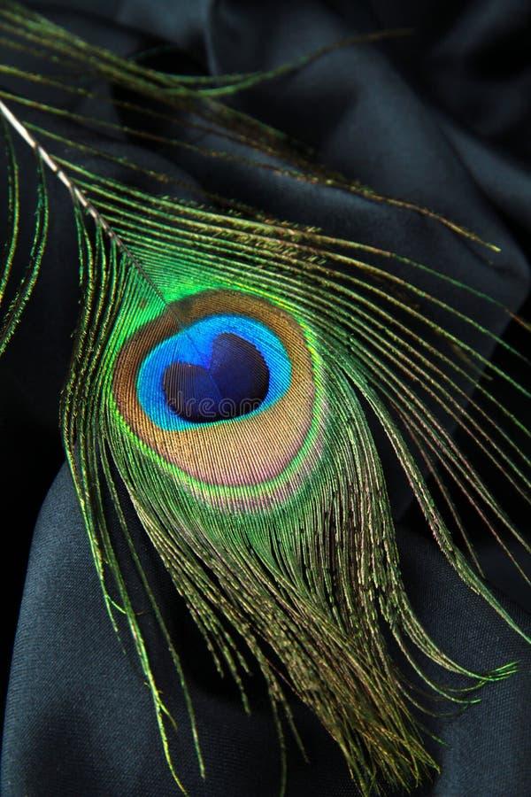 Piuma di un pavone immagini stock