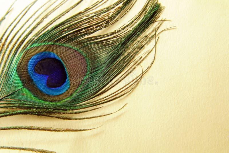 Piuma di un pavone fotografia stock