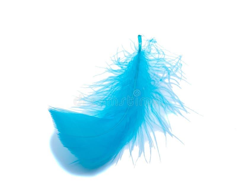 Piuma lanuginosa blu delicatamente isolata sui precedenti bianchi dello studio immagini stock