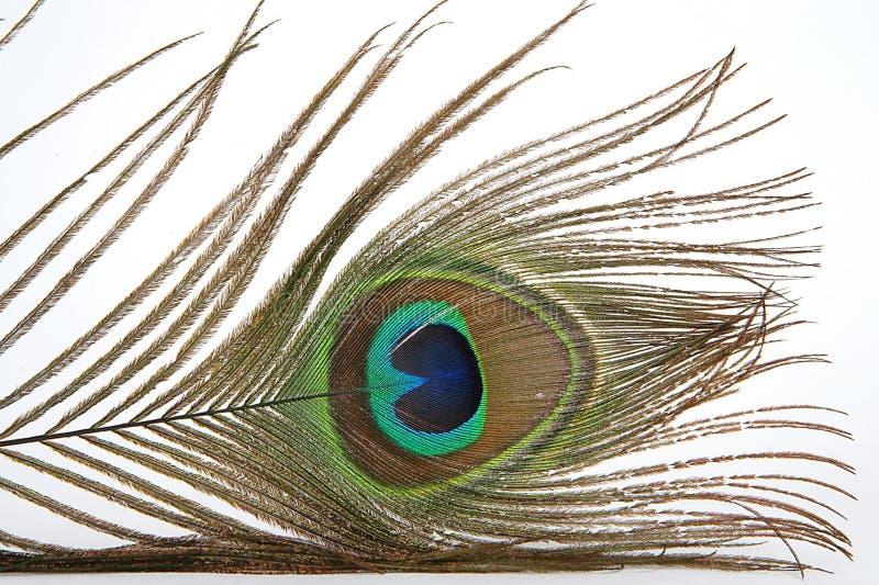 Download Piuma multicolore immagine stock. Immagine di feathered - 217047