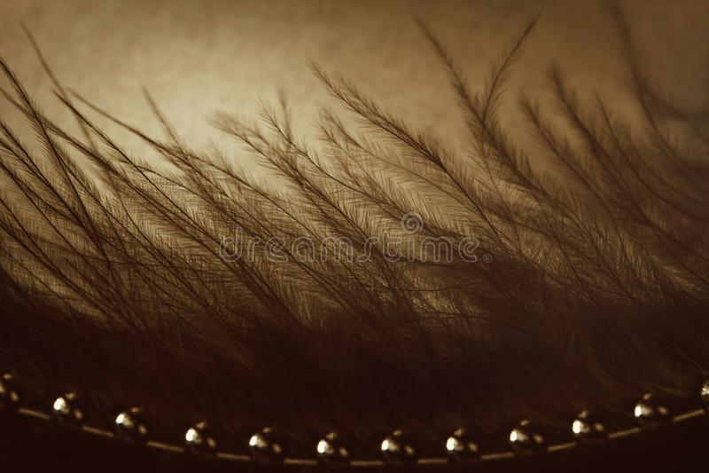Piuma nera con le gocce di acqua Macro Le gocce brillano nel tramonto Foto astratta di seppia Piume lanuginose come una foresta m fotografia stock libera da diritti