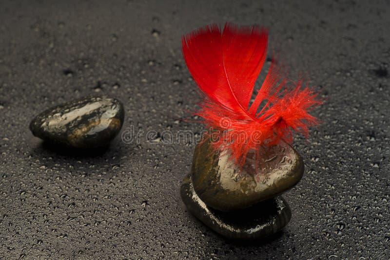 Piuma rossa sulle pietre concernenti le gocce di acqua fotografia stock