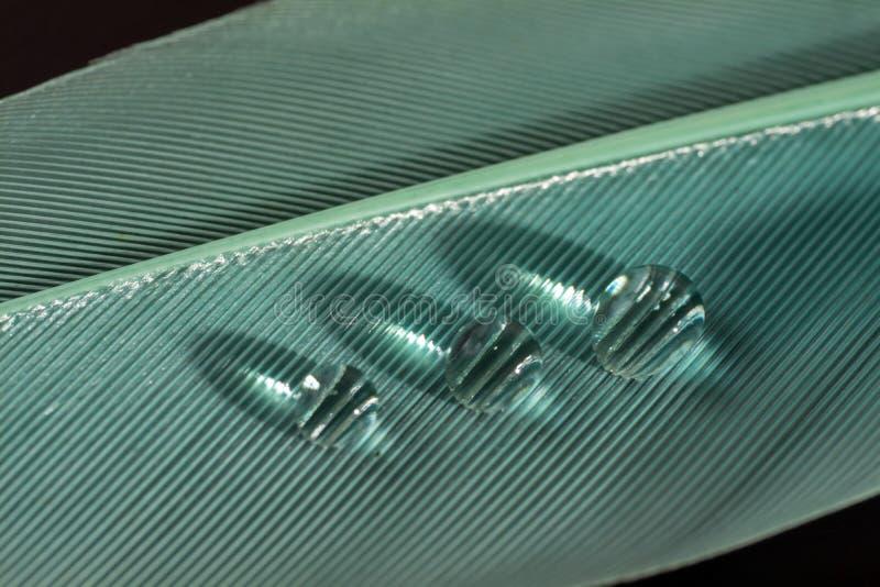 Piuma verde con le gocce immagini stock libere da diritti