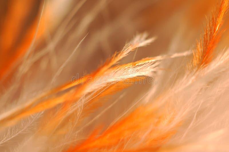 Piume arancioni fotografie stock libere da diritti