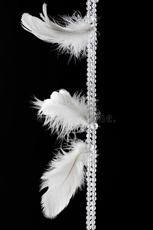 Piume bianche fotografia stock