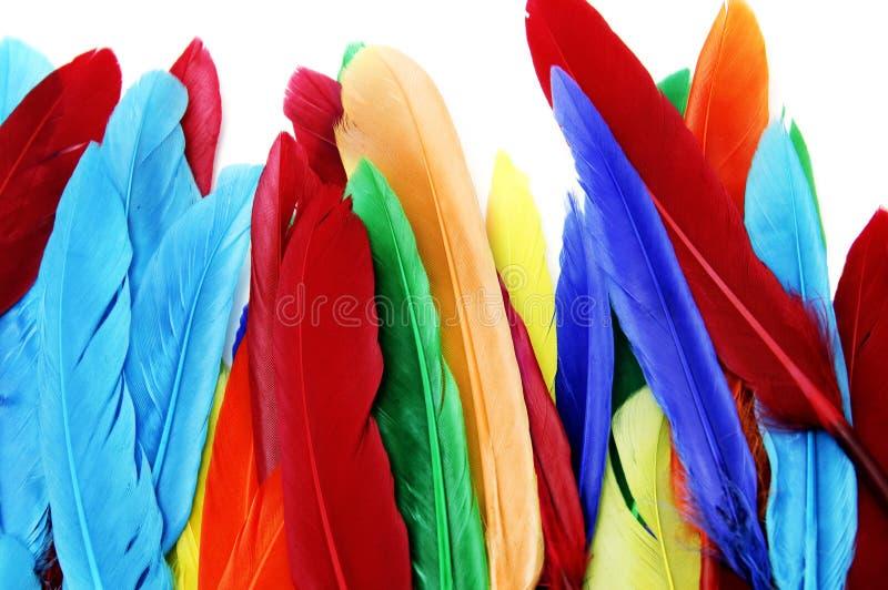 Piume colorate immagine stock