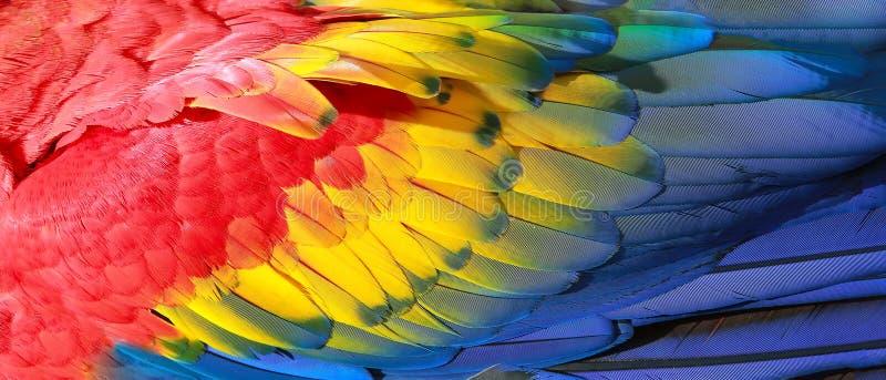 Piume del pappagallo fotografia stock