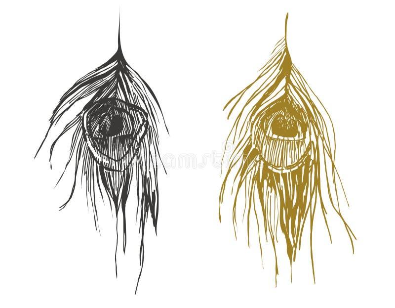 Piume del pavone illustrazione di stock