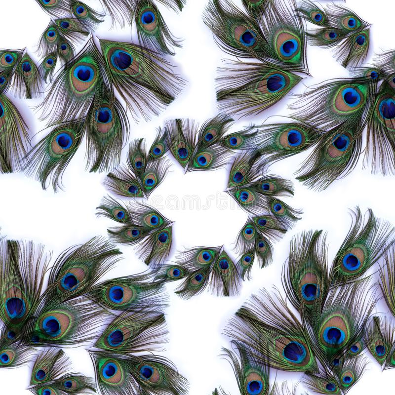 Piume del pavone su fondo bianco Fondo senza cuciture Un collage delle piume Usi i materiali stampati, i segni, gli oggetti, siti fotografia stock libera da diritti