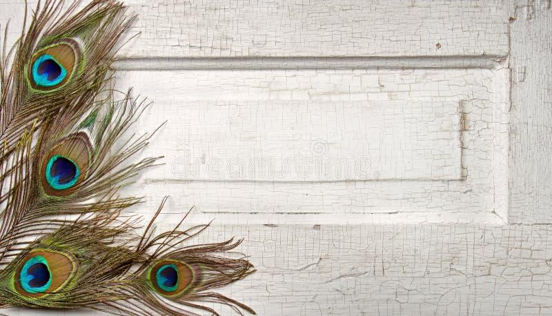 Piume del pavone sul portello dell'annata immagine stock libera da diritti