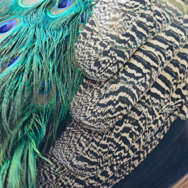 Piume del pavone verde immagini stock libere da diritti