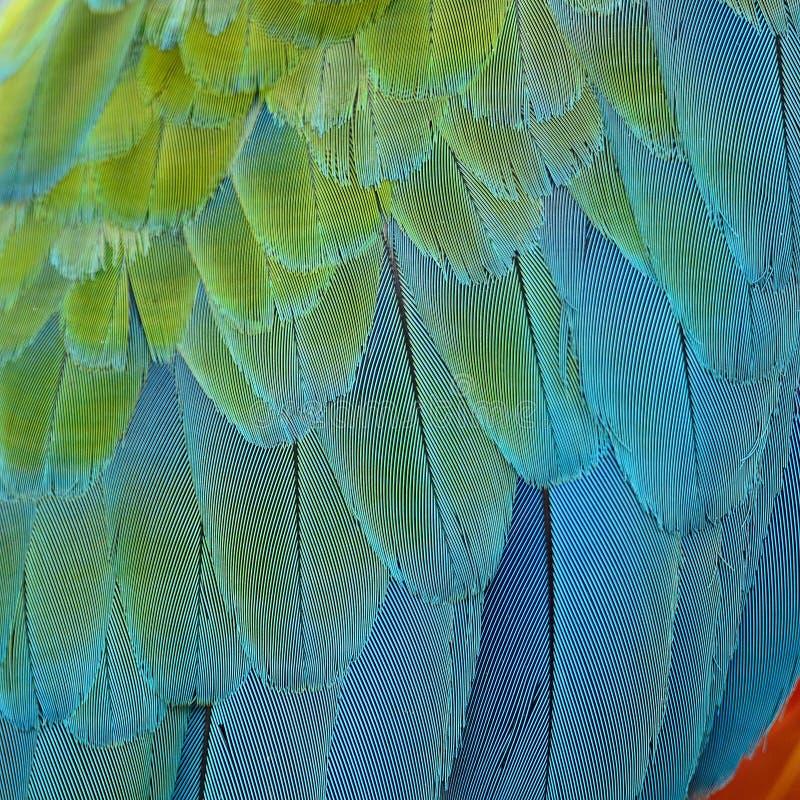 Piume dell'ara dell'arlecchino immagine stock