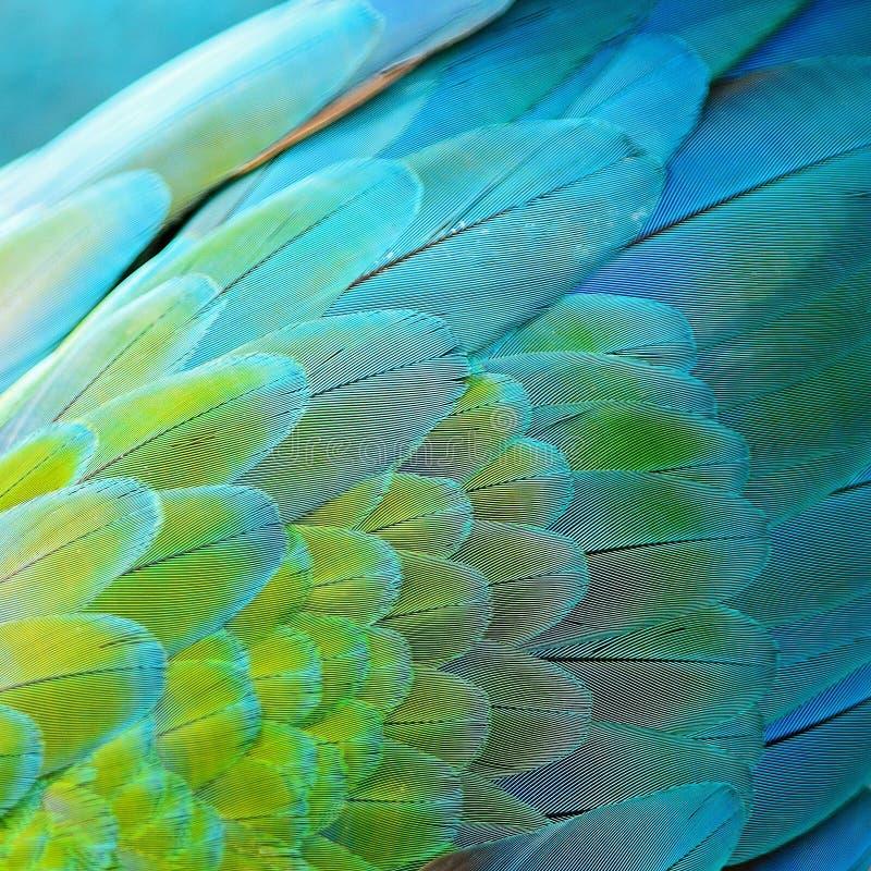 Piume dell'ara dell'arlecchino fotografie stock