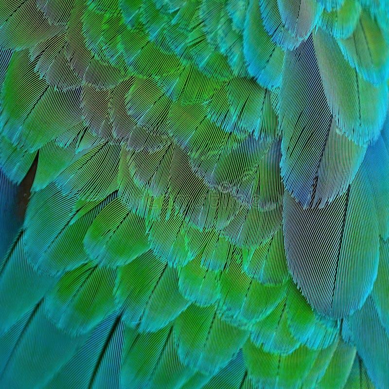Piume dell'ara dell'arlecchino fotografie stock libere da diritti