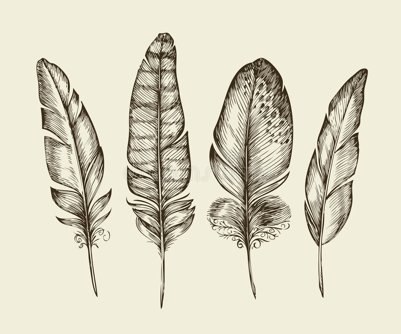 Piume di uccello d'annata disegnate a mano Piuma di scrittura di schizzo Illustrazione di vettore illustrazione di stock