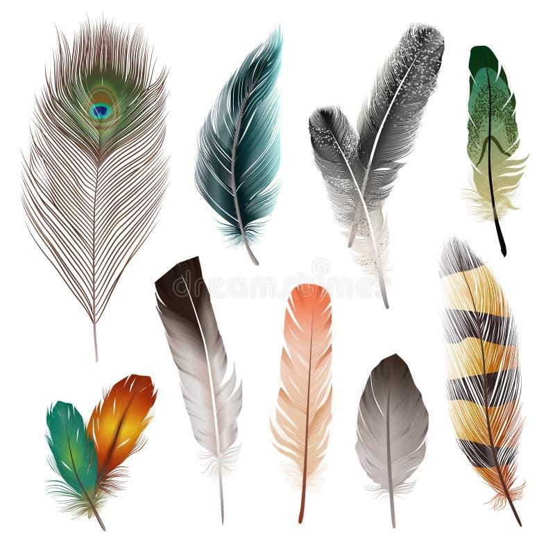 Piume di uccello messe illustrazione di stock