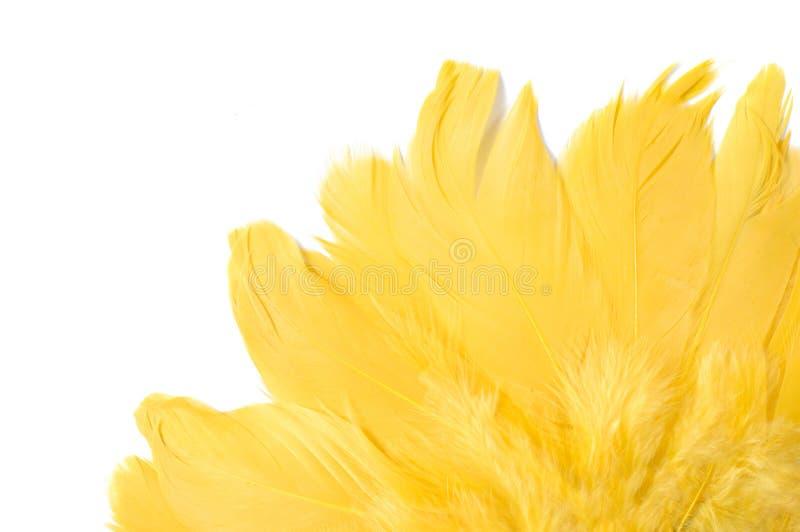 Piume gialle fotografia stock libera da diritti