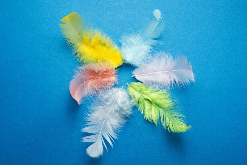 Piume multicolori del pappagallo su un fondo blu fotografia stock libera da diritti