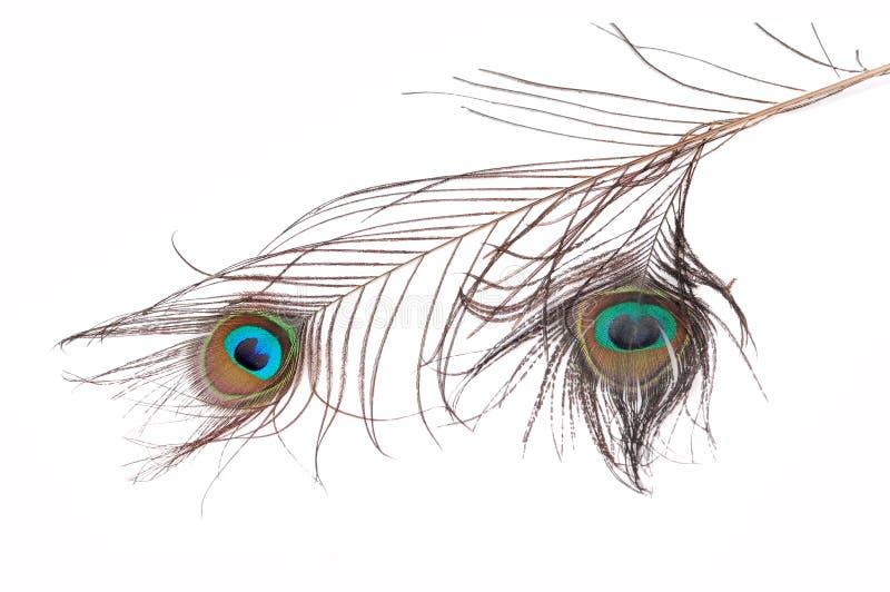 Piume sacre del pavone immagini stock libere da diritti