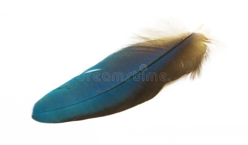 Piume variopinte dell'ara dell'arlecchino fotografie stock