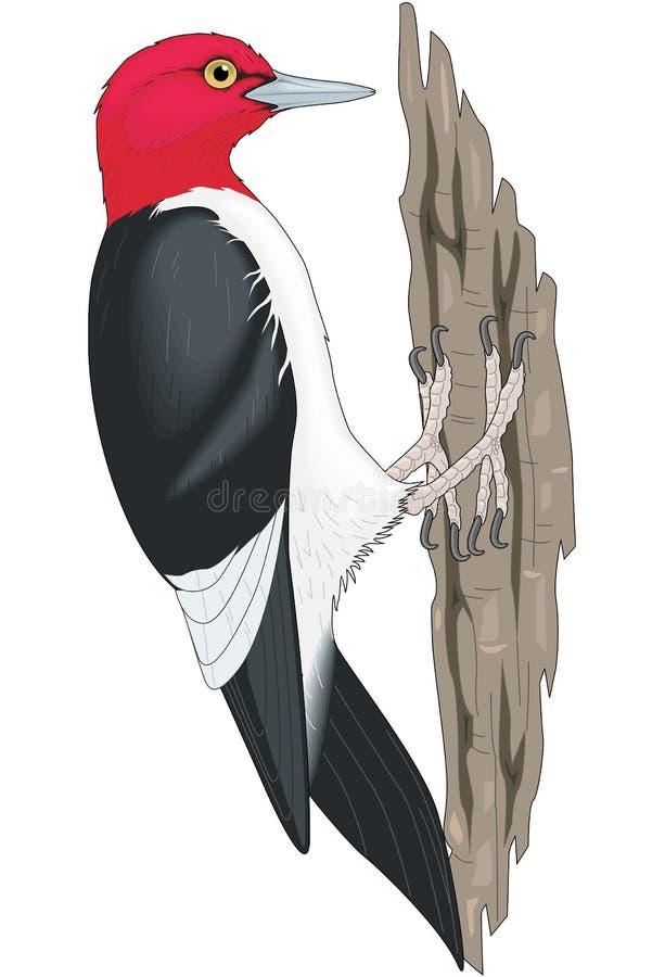 Pivert dirigé rouge sur l'illustration de tronc d'arbre illustration de vecteur