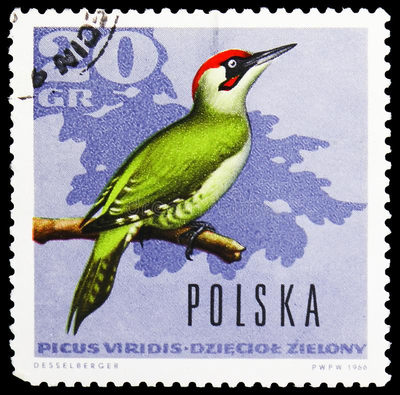 Pivert vert européen (viridis de Picus), serie de Forest Birds, vers 1966 photo stock