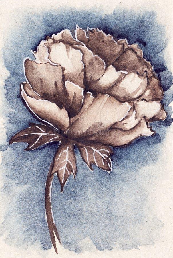 Pivoine de fleur de sépia de bleu marine de vintage d'aquarelle illustration libre de droits