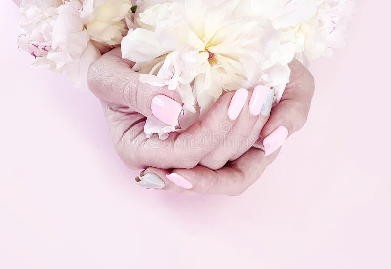 Pivoine femelle de fleur de manucure de mains sur un fond rose photographie stock libre de droits
