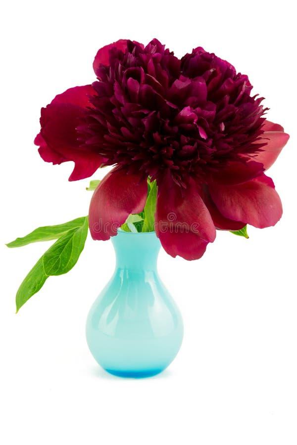 Pivoine rouge dans le vase bleu image libre de droits