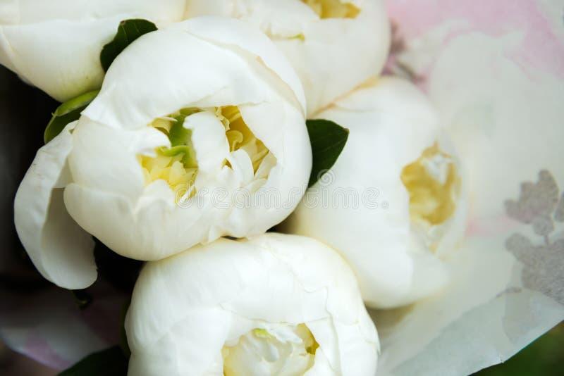 Pivoines blanches dans un bouquet photographie stock libre de droits