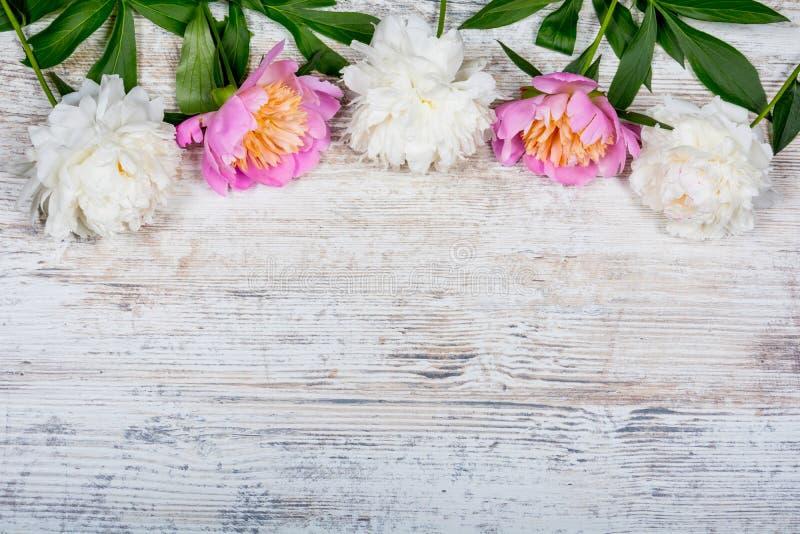 Pivoines blanches et roses sur un panneau en bois de vieux vintage texturisé pour faire de la publicité, site Configuration plate photos stock