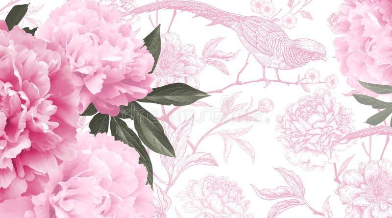 Pivoines de fleurs de rose de photo et modèle graphique avec les fleurs et l'oiseau illustration stock