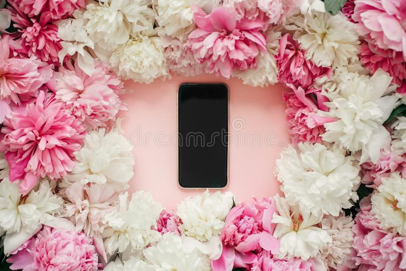 Pivoines et téléphone de rose et blancs avec l'écran vide sur le papier rose en pastel L'appartement élégant s'étendent avec l'es image libre de droits